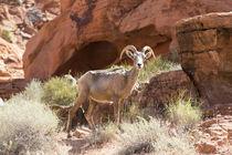 USA, Nevada, Clark County, Valley of Fire State Park von Danita Delimont