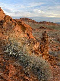 Landscape of Valley of Fire State Park, Nevada, USA by Danita Delimont