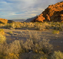 Valley floor in Valley of Fire State Park, Nevada, USA by Danita Delimont