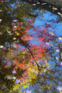 Fall leaves in Basin Cascade, New Hampshire von Danita Delimont