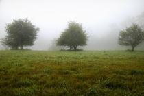 USA, New England New Hampshire Trees in fog von Danita Delimont