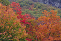 Autumn at Bemis Falls Trail, Crawford Notch State Park, New ... by Danita Delimont