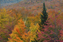 Autumn at Flume Area, Franconia Notch State Park, New Hampshire, USA. by Danita Delimont