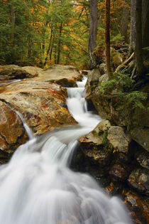 Pemigewasset River in Franconia Notch State Park, New Hampshire, USA. von Danita Delimont