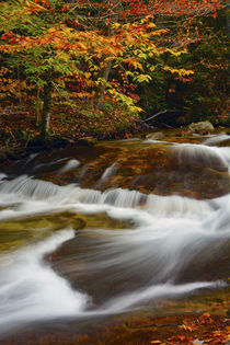 Pemigewasset River, Pemigewasset Trail, Franconia Notch Stat... by Danita Delimont