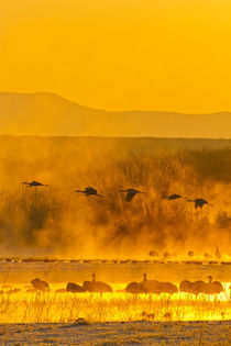 USA, New Mexico, Bosque del Apache National Wildlife Refuge von Danita Delimont