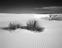 USA, New Mexico, White Sands National Monument by Danita Delimont