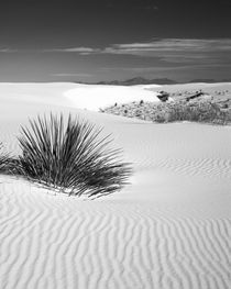USA, New Mexico, White Sands National Monument von Danita Delimont