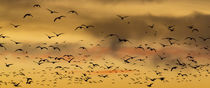 USA, New Mexico, Bosque del Apache National Wildlife Refuge by Danita Delimont