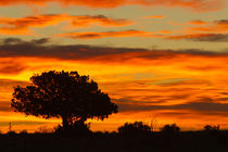 Sunrise, Cimarron, New Mexico, Hwy 64, von Danita Delimont