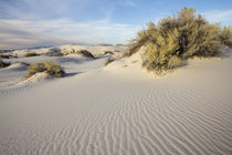 White Sands National Monument, New Mexico von Danita Delimont