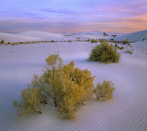 Beautiful sunset over White Sand National Monument, New Mexico, USA von Danita Delimont