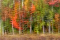 USA, New York, Adirondack Mountains von Danita Delimont