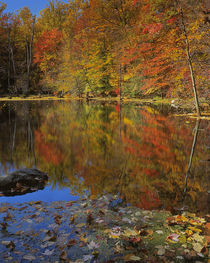 USA, New York, Adirondack Mountains, Autumn Pond, Putnam County by Danita Delimont