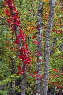 Autumn foliage at Mohonk Lake Region, Shawangunk Mountains, ... von Danita Delimont
