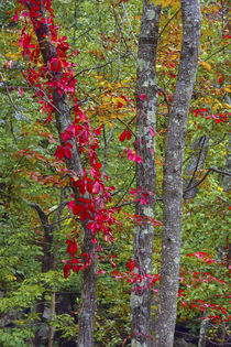 Autumn foliage at Mohonk Lake Region, Shawangunk Mountains, ... by Danita Delimont
