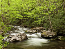 USA, North Carolina, Great Smoky Mountains National Park, St... von Danita Delimont