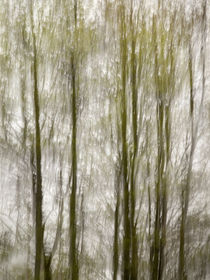 USA, North Carolina, Blue Ridge Parkway, Abstract of trees c... by Danita Delimont