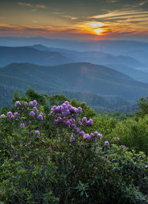Sunset and Catawba Rhododendron, Cowee Mountain, Overlook, B... von Danita Delimont