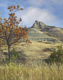 Fall foliage in South Unit, Theodore Roosevelt National Park... by Danita Delimont