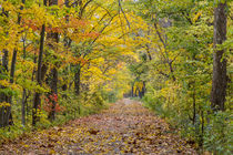 Independence St Park Autumn by Danita Delimont