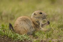 USA, Oklahoma, Wichita Mountains National Wildlife Refuge von Danita Delimont