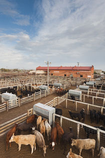 USA, Oklahoma, Oklahoma City, Oklahoma National Stockyards, ... by Danita Delimont