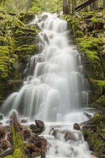 White Branch Falls, Oregon Cascades, Oregon von Danita Delimont