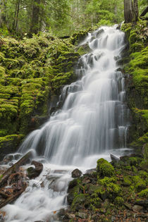 White Branch Falls, Oregon Cascades, Oregon by Danita Delimont