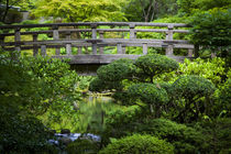 Bridge over pond in the Japanese Garden, Portland, Oregon, USA. by Danita Delimont