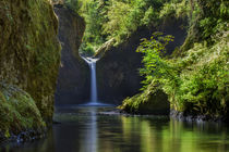 Punchbowl Falls along Eagle Creek Trail, Columbia River Gorg... von Danita Delimont