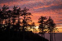 Silhouetted fir trees at sunset, Ecola State Park near Canno... by Danita Delimont