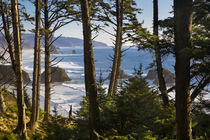 Oregon coastline at Cannon Beach, viewed through the trees a... by Danita Delimont