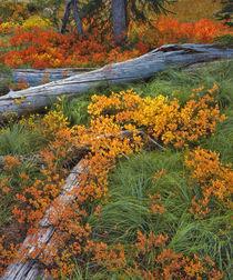 USA, Oregon, Willamette National Forest von Danita Delimont