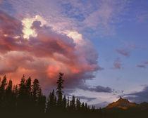USA, Oregon, Umpqua National Forest von Danita Delimont