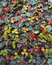 USA, Oregon, Mt Hood National Forest von Danita Delimont