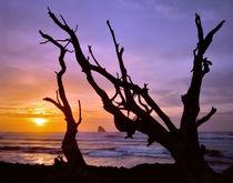 USA, Oregon, Cape Meares von Danita Delimont