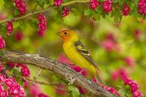 USA, Oregon, Malheur National Wildlife Refuge by Danita Delimont