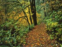 USA, Oregon, Silver Falls State Park by Danita Delimont