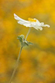 USA, Oregon von Danita Delimont