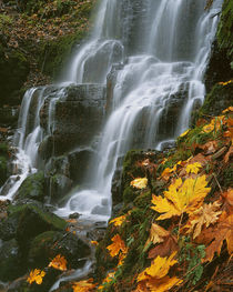 USA, Oregon, Fairy Falls, Columbia River Gorge National Scenic Area von Danita Delimont