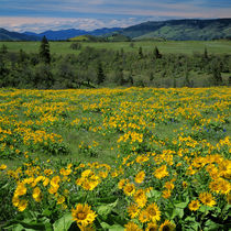 USA, Oregon, Columbia River Gorge National Scenic Area, Tom ... von Danita Delimont