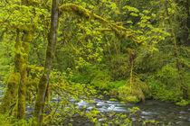 Eagle Creek by Danita Delimont
