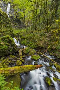 Elowah Falls by Danita Delimont