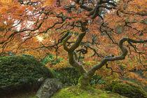 Japanese Gardens by Danita Delimont