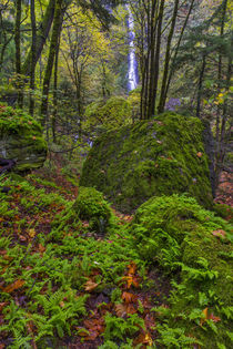 Autumn color along Starvation Creek Falls in the Columbia Go... by Danita Delimont