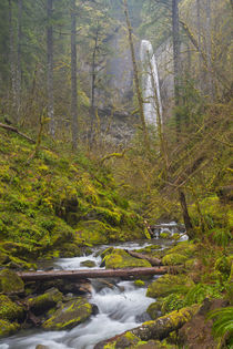 USA, Oregon, Columbia Gorge von Danita Delimont