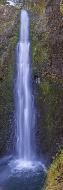 Oregon. Vertical panorama view of Tunnel Falls, 6 miles up f... by Danita Delimont
