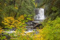 USA, Oregon, Silver Falls State Park, Upper North Falls, 65 feet von Danita Delimont