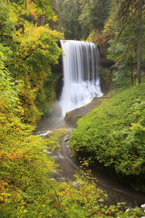 USA, Oregon, Silver Falls State Park, Middle North Falls, 106 feet von Danita Delimont